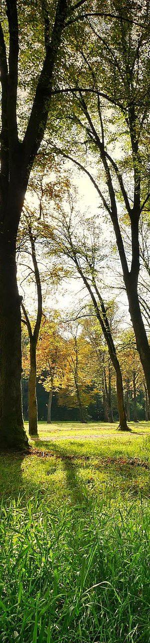 landscape-3076834_1920
